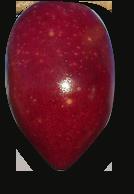 Cornicabra Olijf